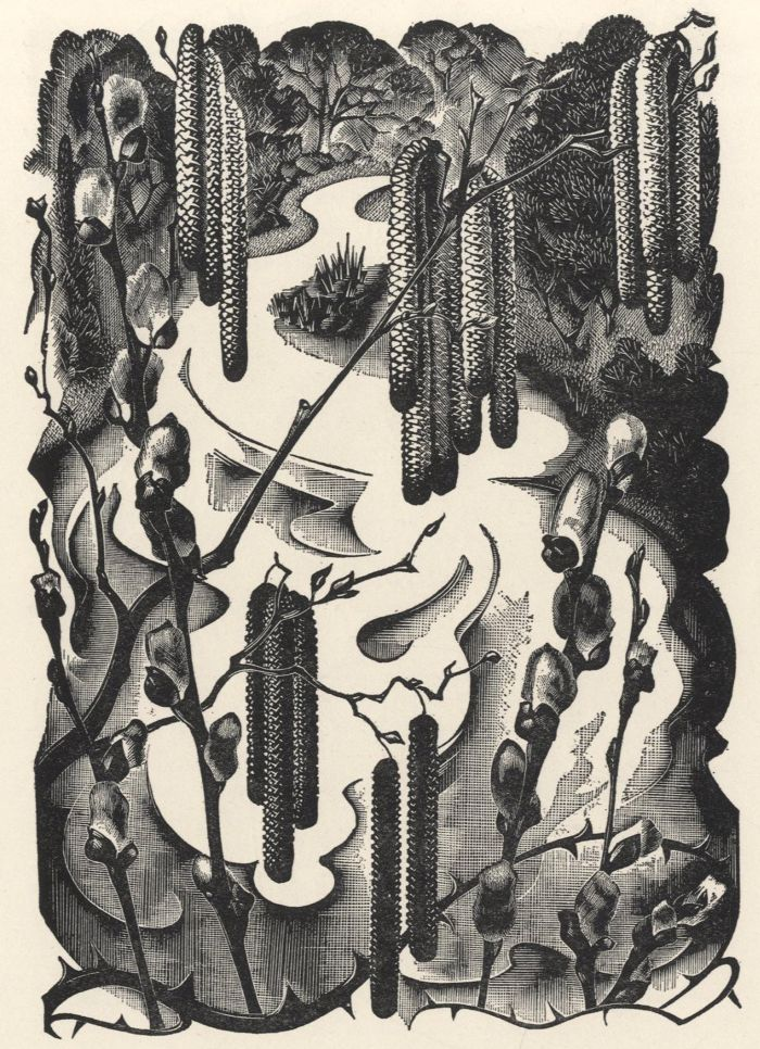 Agnes Miller-Parker, Willow catkins, from 'Through the Woods'