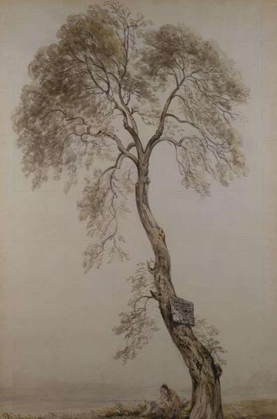 John Constable, An Ash Tree, 1835