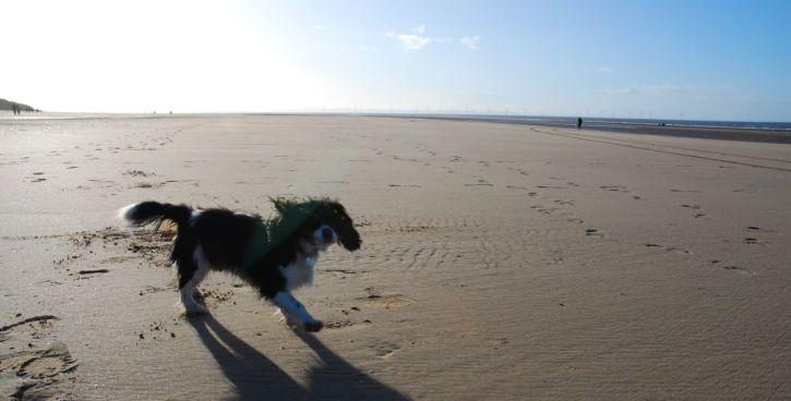 fudge-beach-2