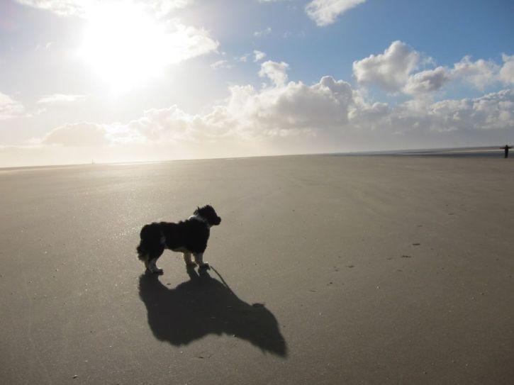 fudge-beach