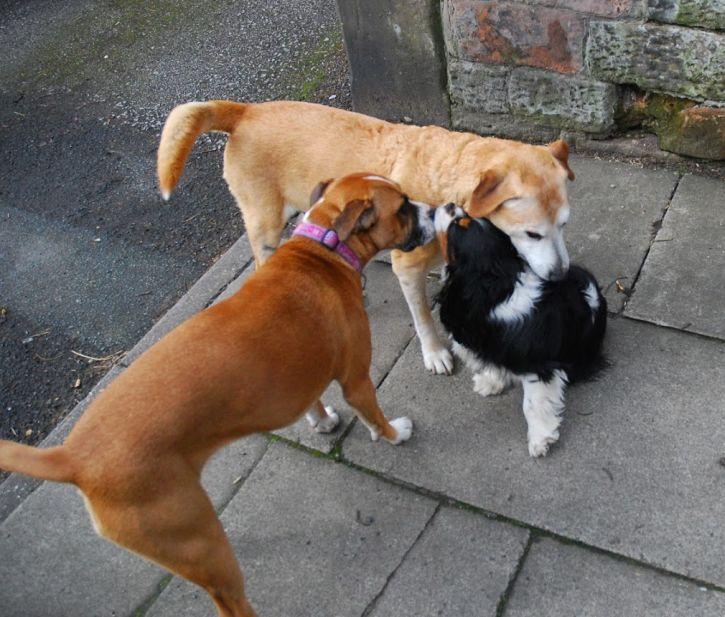 fudge-dogs-on-street