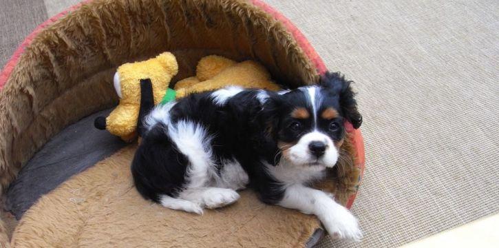 fudge-pup