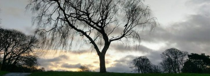 Trees in Sefton Park, December