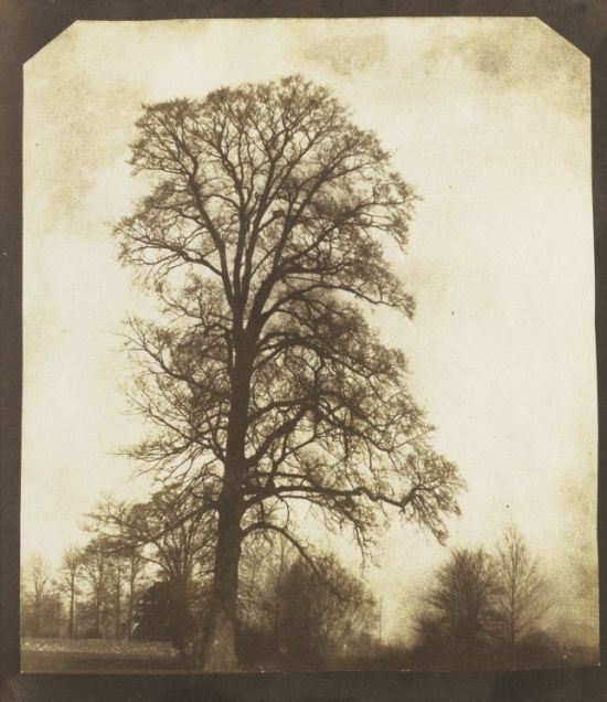 William Henry Fox Talbot, Elm in Winter, c1845