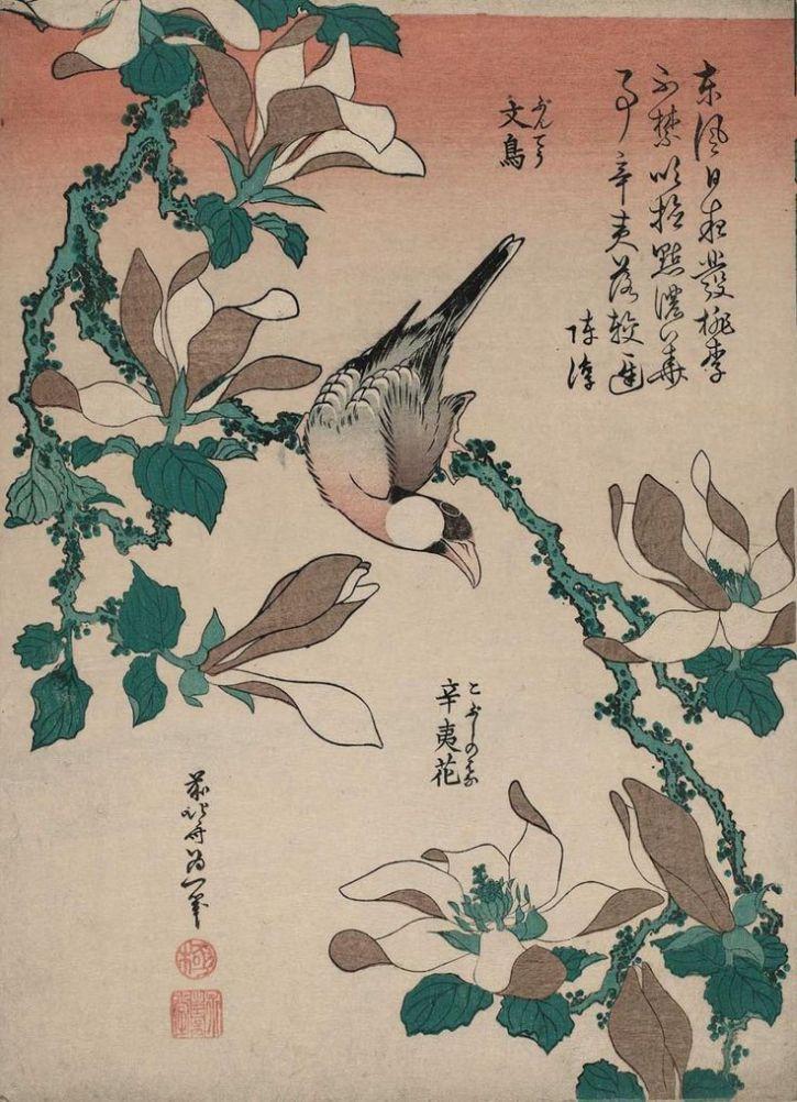 Hokusai, Java Sparrow on Magnolia, 1834