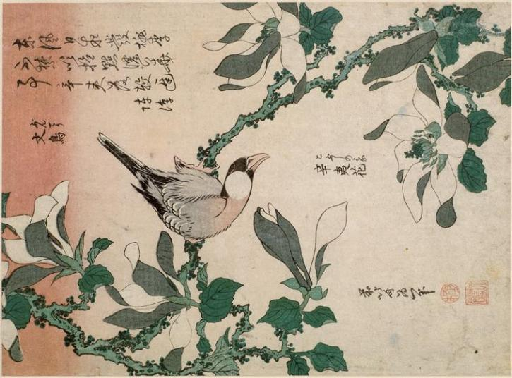 Hokusai, Sparrow and Magnolia, 1834