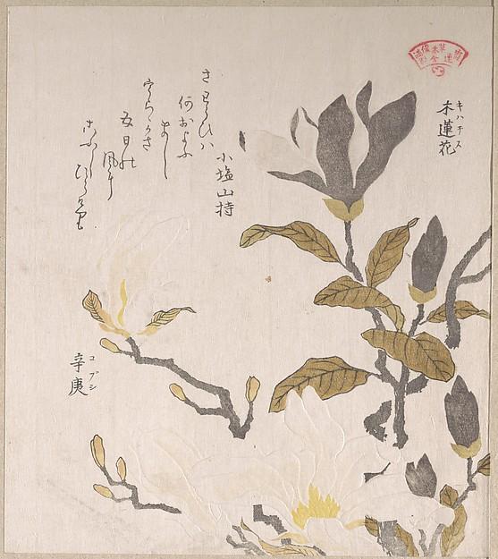 Kubo Shunman (1757-1820), Magnolia