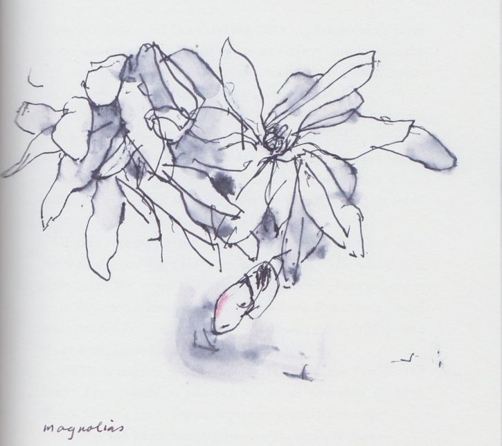 Magnolias, drawing by John Berger from his book Bento's Sketchbook