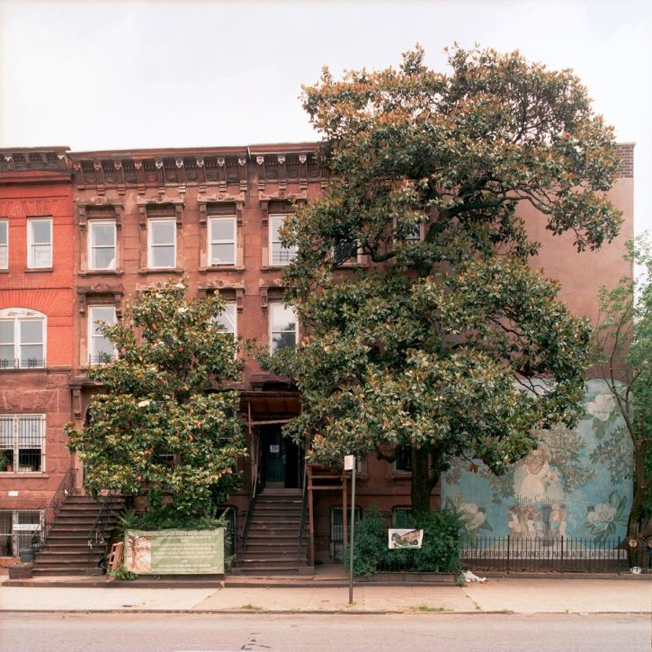 The original magnolia, 132 years old, outside the Magnolia Tree Earth Centre in New York