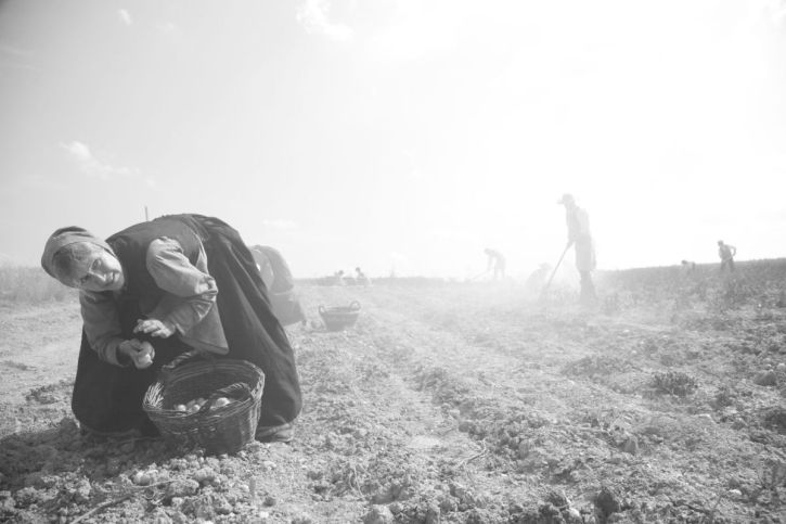 The potato harvesters: Marita Breuer as Margarethe Simon